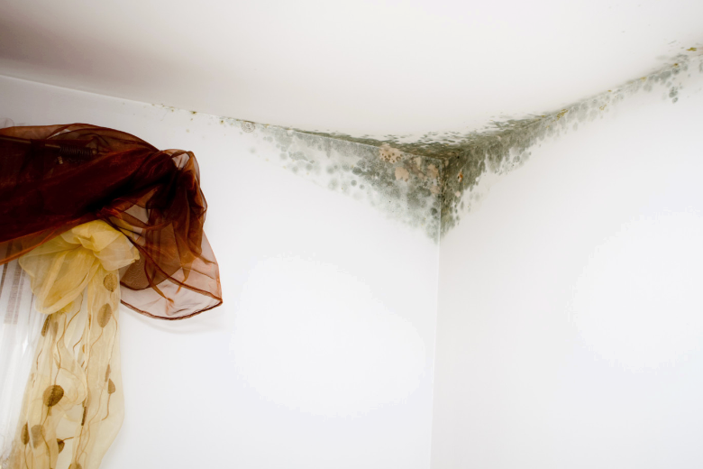 5 Tips to Prevent Mold in Your Home
