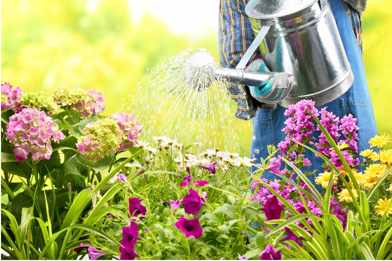Keeping Your Garden Fresh & Alive in The Southern Heat